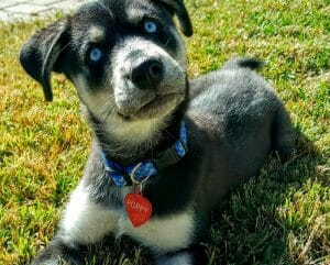 O Que Acontece Quando Cães de Raças Diferentes Se Apaixonam (22 Imagens)