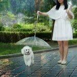 Guarda-Chuva Para Cães
