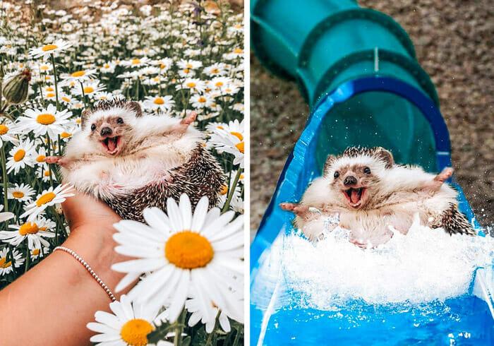 15 Imagens Photoshopadas Engraçadas Que Farão Você Rir
