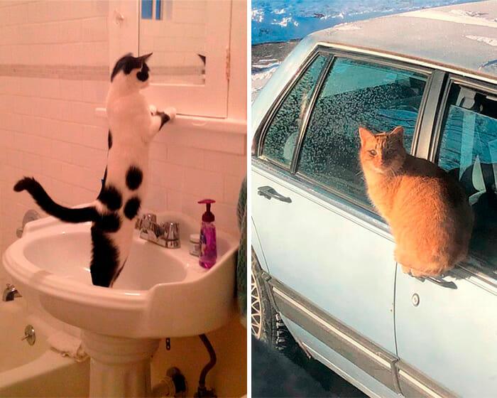 Lógica dos Gatos