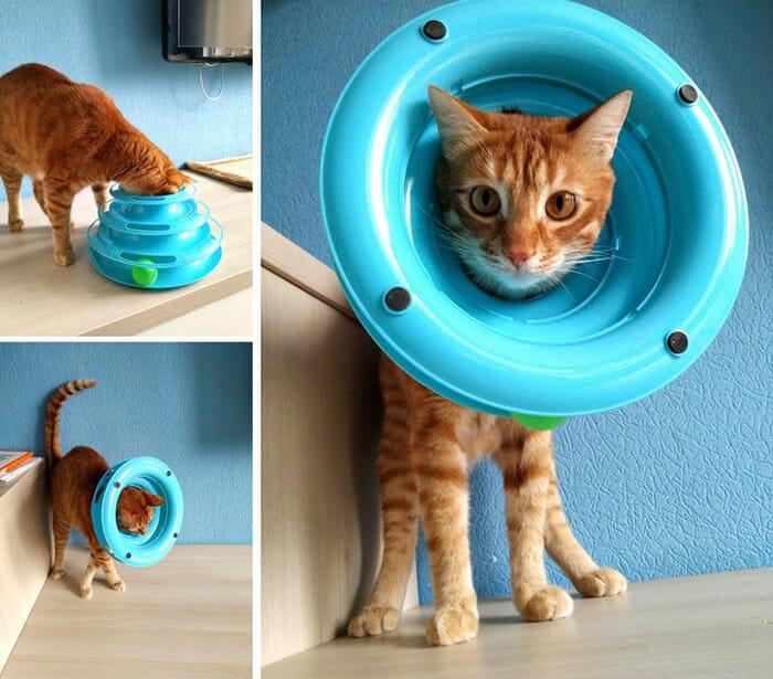 A Lógica dos Gatos Explicada em 21 Imagens Engraçadas