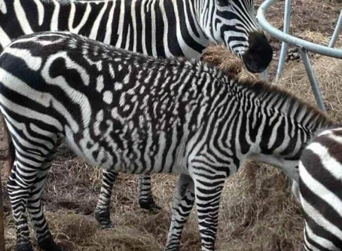 Não é Photoshop! 38 Plantas e Animais com Cores Raras Encontrados na Natureza